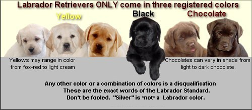 Lorlyn Labrador Retrievers   Frequently Asked Questions